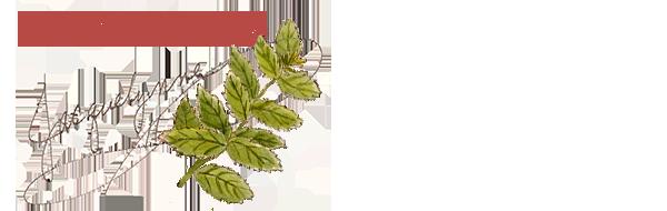 Basil herb art- Jacquelynne Steves