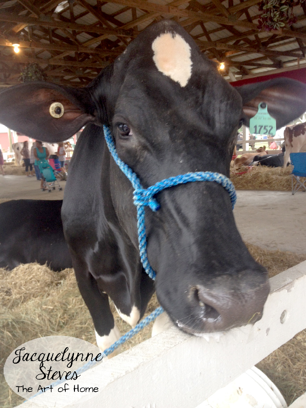 Love the sweet dairy cows, too.
