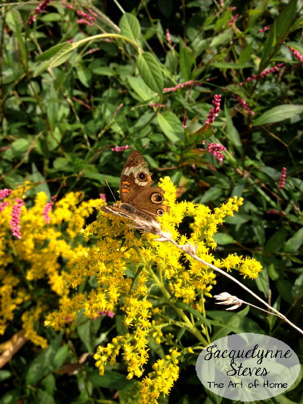 Butterfly On Goldenrod-Jacquelynne Steves